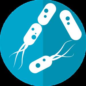 Bakterien probiotisch probiotika präbiotisch Präbiotika