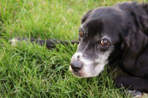 alter hund Immunsystem krank krebs mangel mineralstoff vitamine